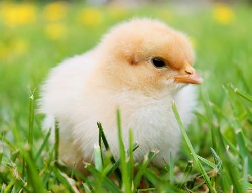 Zirkularität. Henne oder Ei – was war zuerst da?